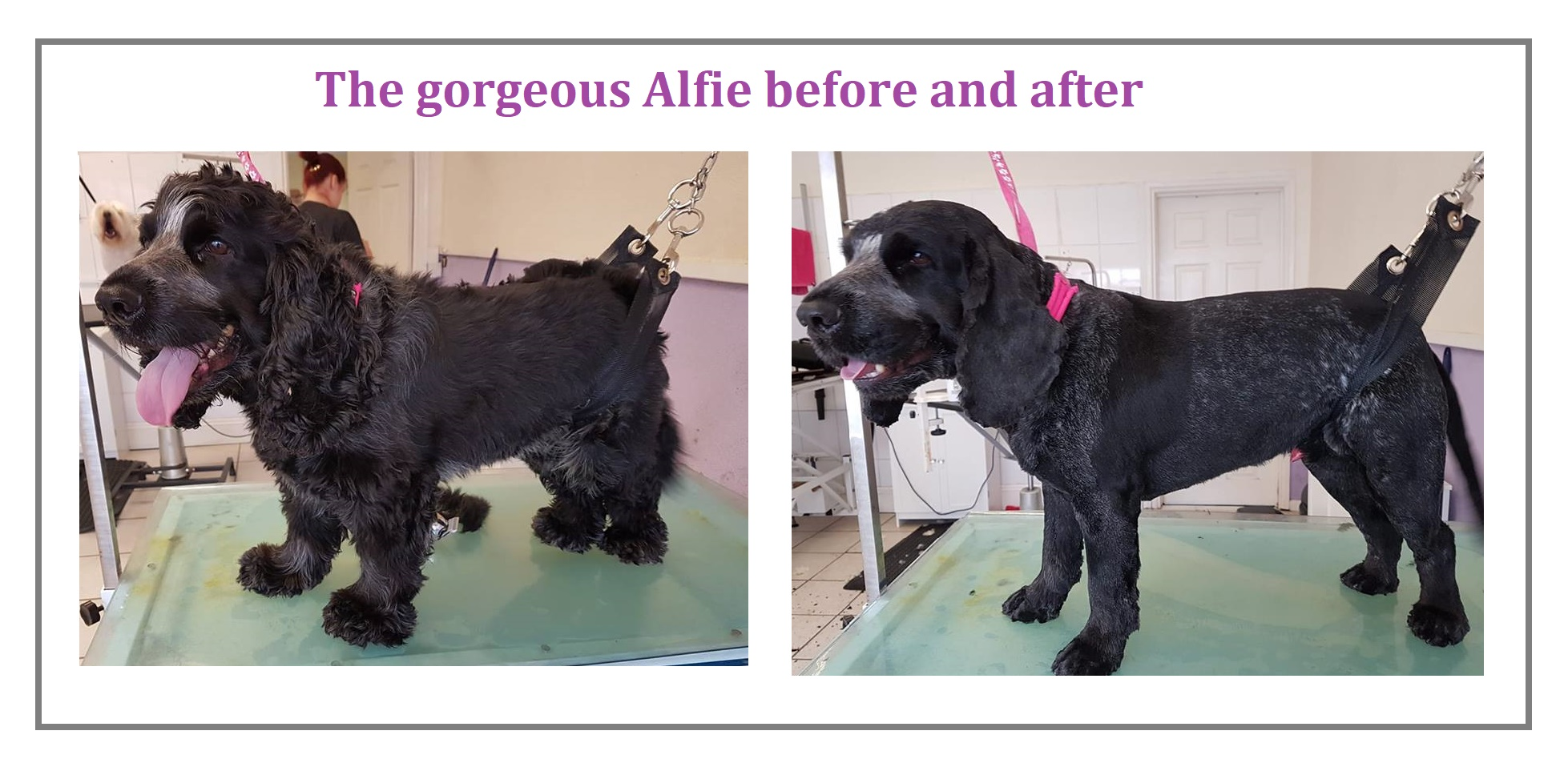 Alfie 19.8.18 after.Ali complete