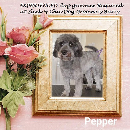 PEPPER PIC FOR GROOMER AD.jpg