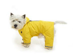 Buster aqua coat, dog coats, dog jumper, dog clothing, dog pyjamas, dog outdoor wear