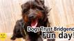 Bridgend Dog's Trust Fun Day Margam Park 19th June 2016
