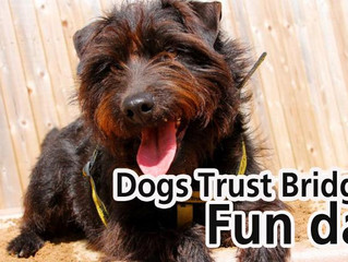 Bridgend Dog's Trust Fun Day Margam Park 19th June 2016