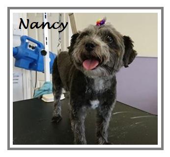 Nancy aug Kim