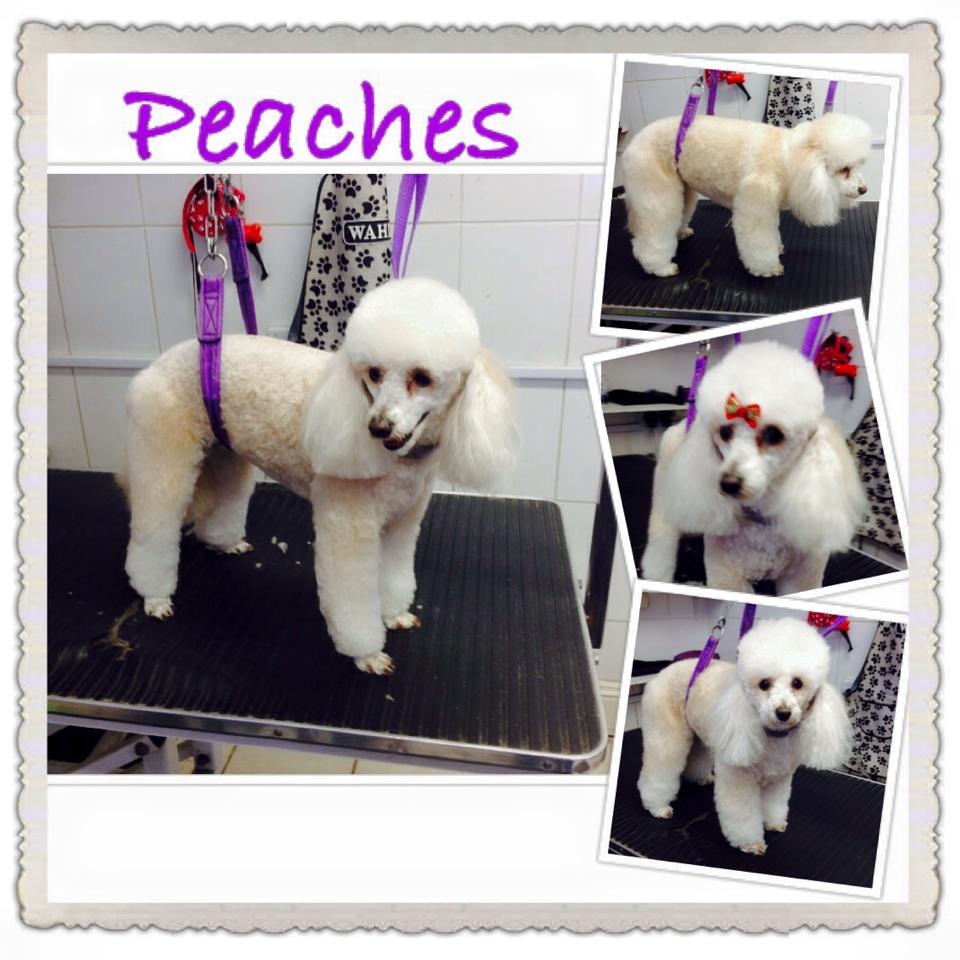 abby peaches