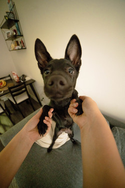 Ultra Wide Dog