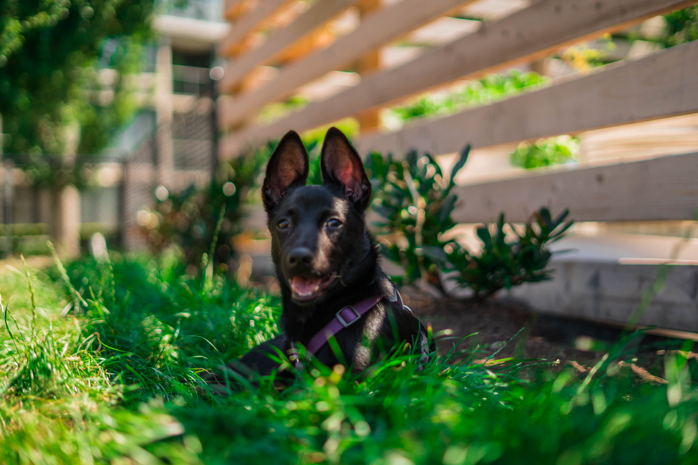 Grassy Oasis Dog