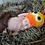 Thumbnail: Duck hat