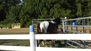 English Horse Show gallery