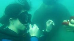 pedido de casamento mergulho
