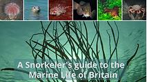 Snorkeler's Guide Bookwehn image.png