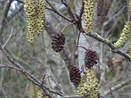 An alder-native way of doing things