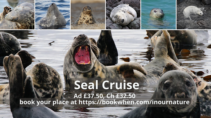 Seal cruise.png