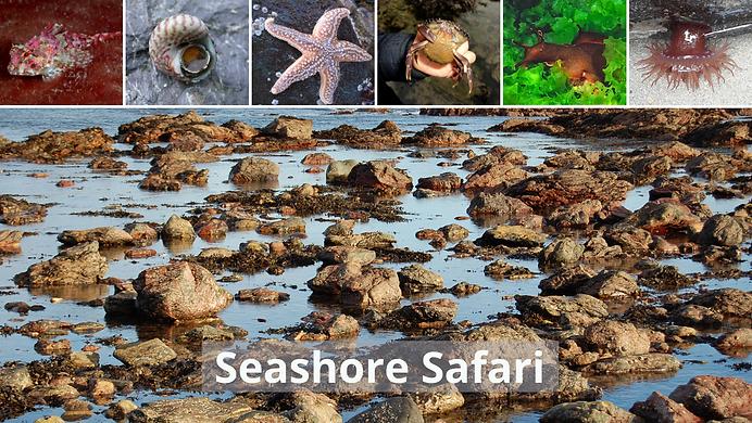 Seashore Safari no text.png