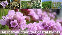 Intro to Coastal Plants.png