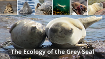 Ecology of the Grey Seal.png