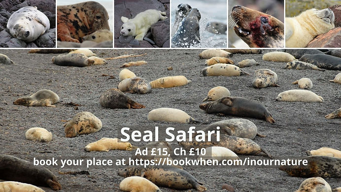 Seal Safari.jpg