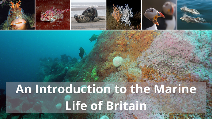 Marine Life - no text.png