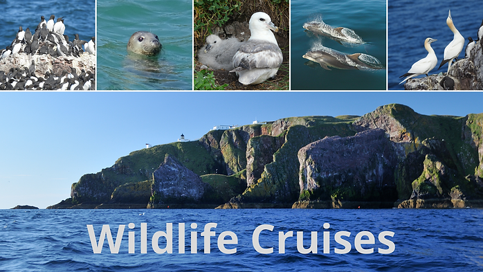 Wildlife Cruises Bookwhen image.png