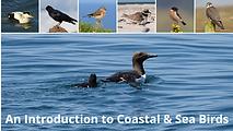 Intro to Coastal & Sea birds.png