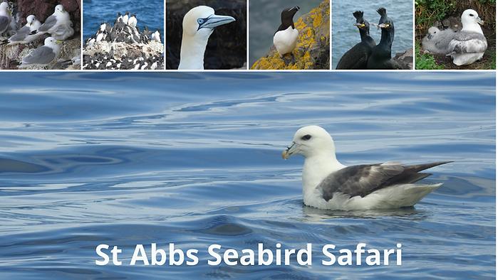 Seabird Safari - no text.png