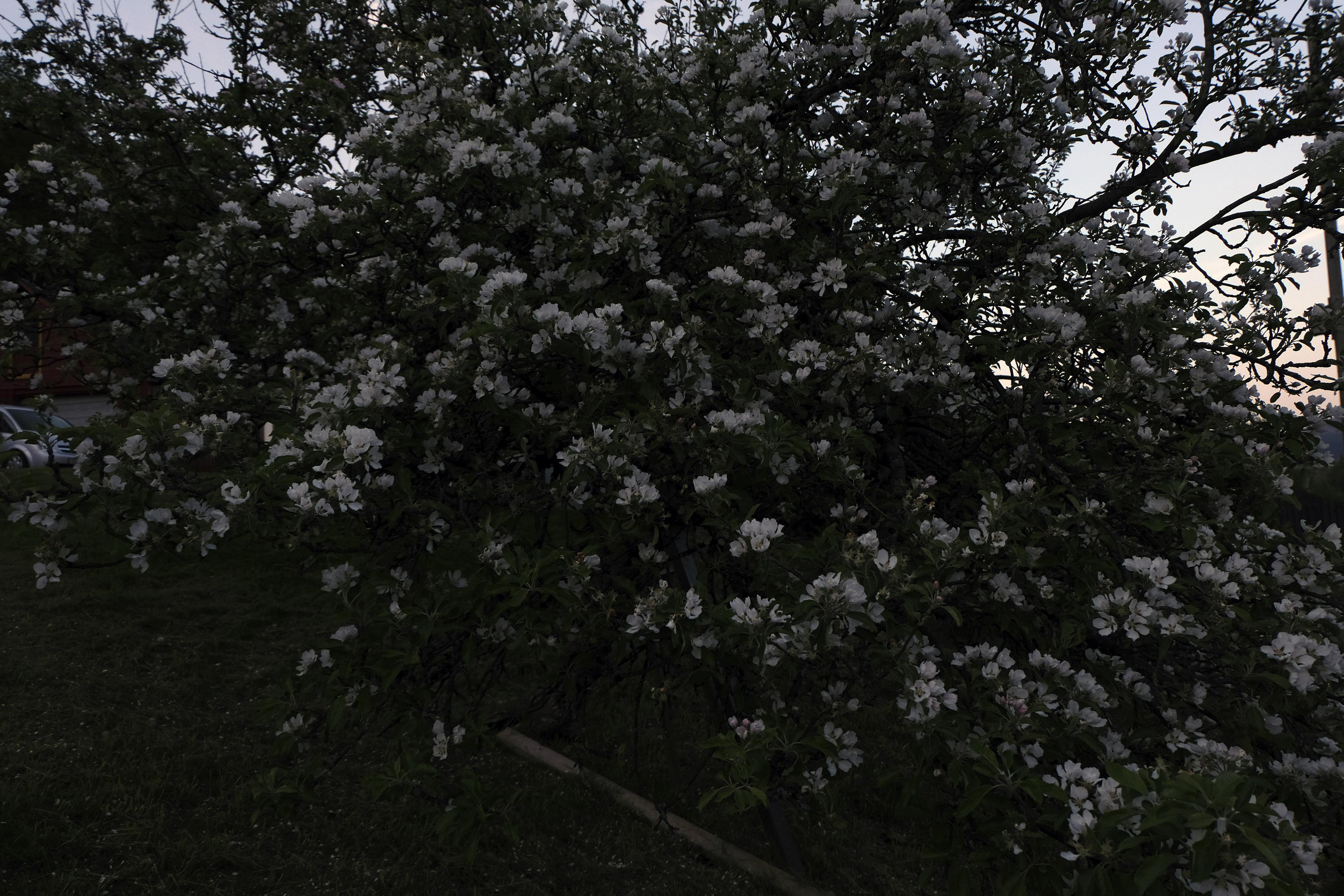 Floral Season