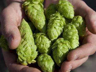 Qué es el IBU y cómo te puede ayudar a elegir una cerveza
