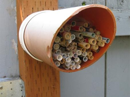 Mason Bee House:  PVC Pipe