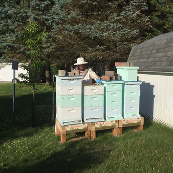 Des Moines Apiary - Summer 2017