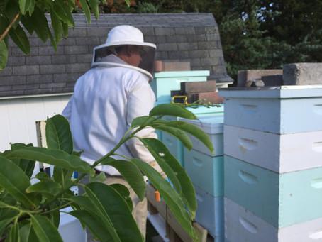 Sourwood Tree Honey