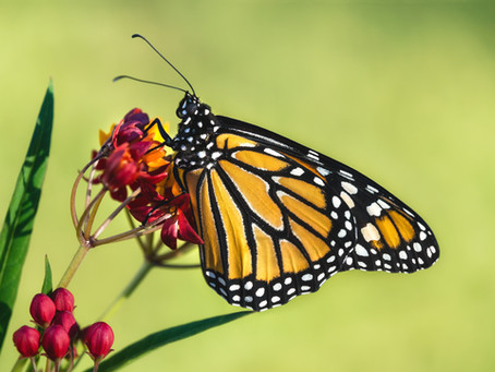 Excellent Time to Start Making a Difference for our Pollinators