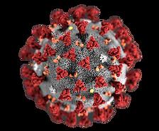 coronavirus-image-small_edited.png