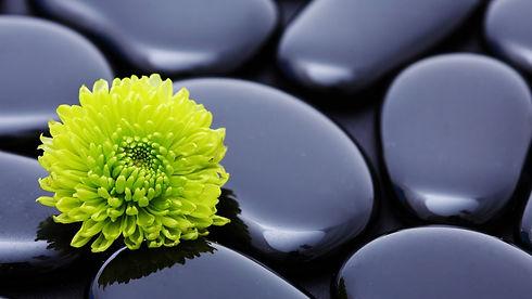 flower_stone_petals_smooth_18292_2560x1440.jpg