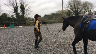 What Signals Does Your Horse Respond To?