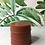 Thumbnail: CITRUS Vegan Soap with Pink Kaolin Clay