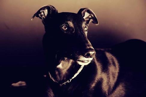 Pets (4).jpg