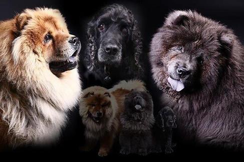 Pets (27).jpg