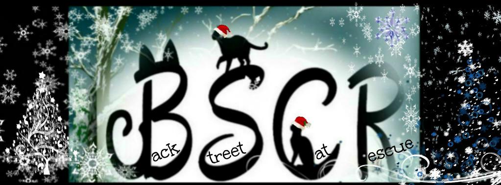 BACK Street CAT Rescue Winter 2020