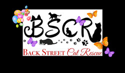 BSCR SPRING 2021