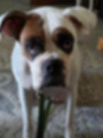 Roxie 4.jpg