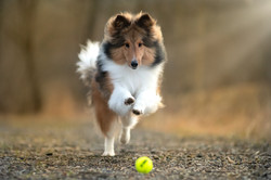 Dood Dog Photography - Jackie Chan
