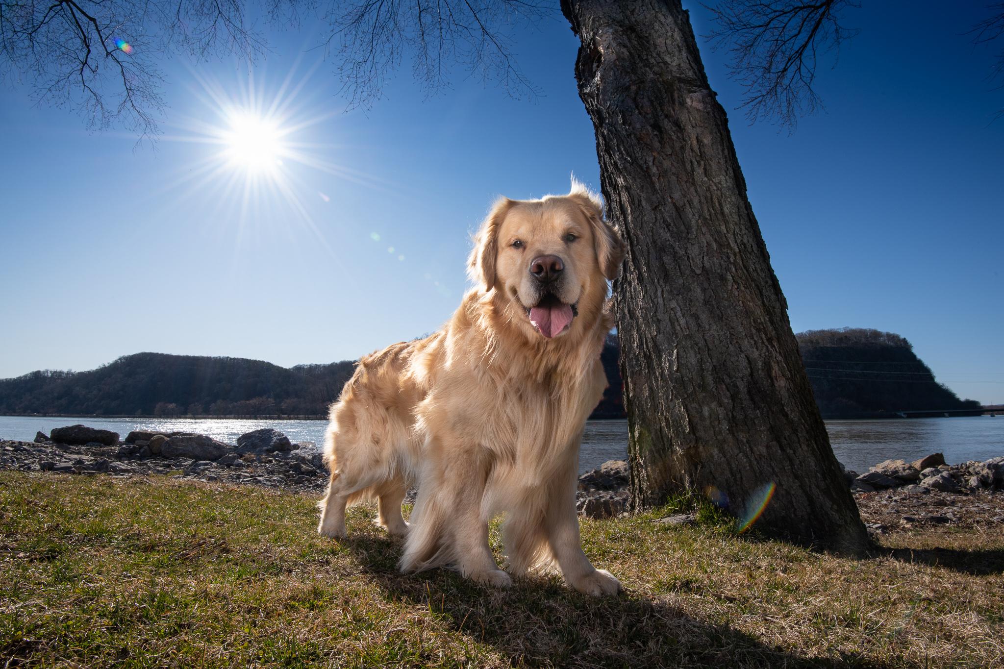 Dood Dog Photography - Rooney