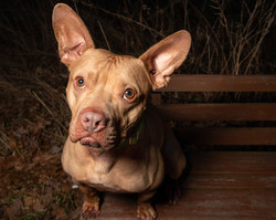 Dood Dog Photography - Calvin