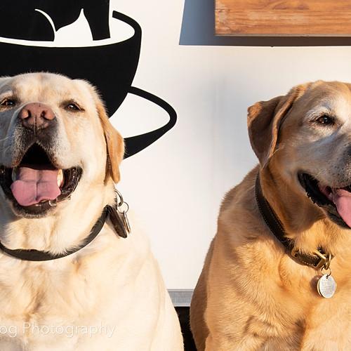 Marshall & Charlie
