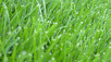 3 Tips for a Healthy Green Lawn