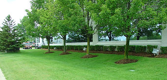 Commercial-Landscape-Maintenance-2.jpg