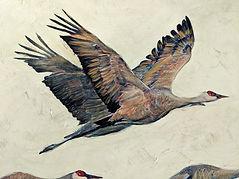 Sandhill cranes detail.jpg