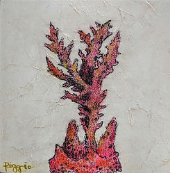 coral 4x4.jpg