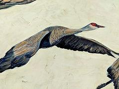 Sandhill cranes detail 2.jpg