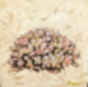 porcilloporidae coral 6x6.jpg