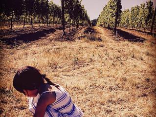 ワインとは(5)