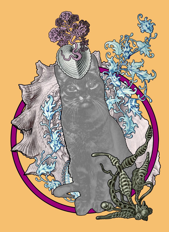 Los gatos de Haeckel II